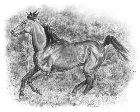 Running arabian horse drawing - photo#18
