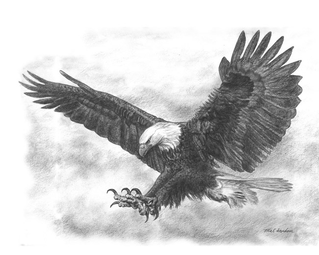 Eagle art done in pencil on paper.